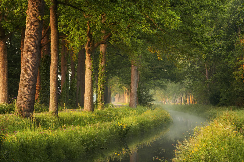 Just a spring morning in the Netherlands