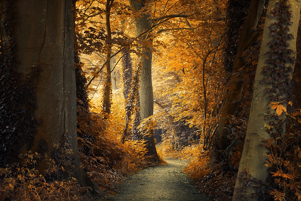 Path to the Light