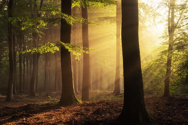 Moment of light