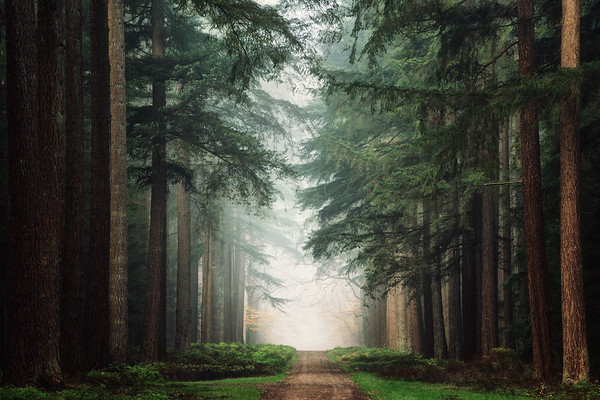 The magic world of pines
