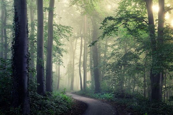 Winding through the forest