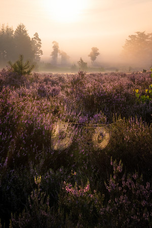 The heather ghost