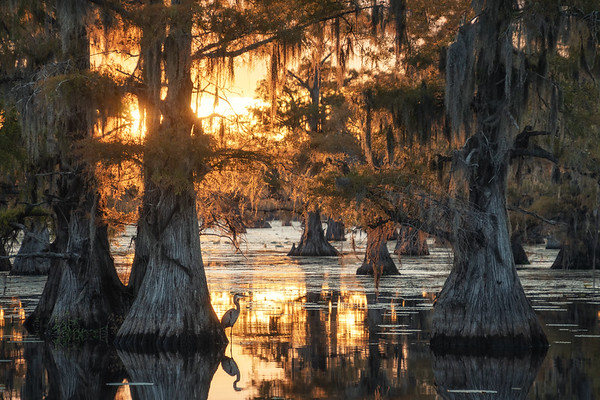 Sunset in the swamps