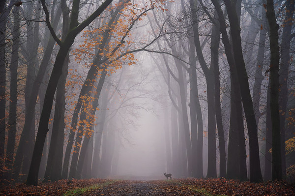 Deer in the fog