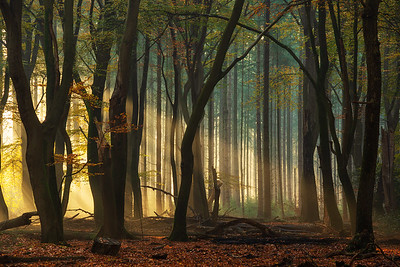 First light in the forest
