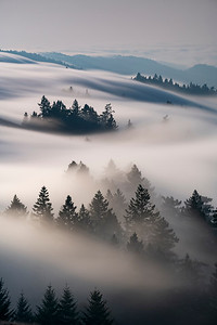 Summer fog flow over Mount Tamalpais