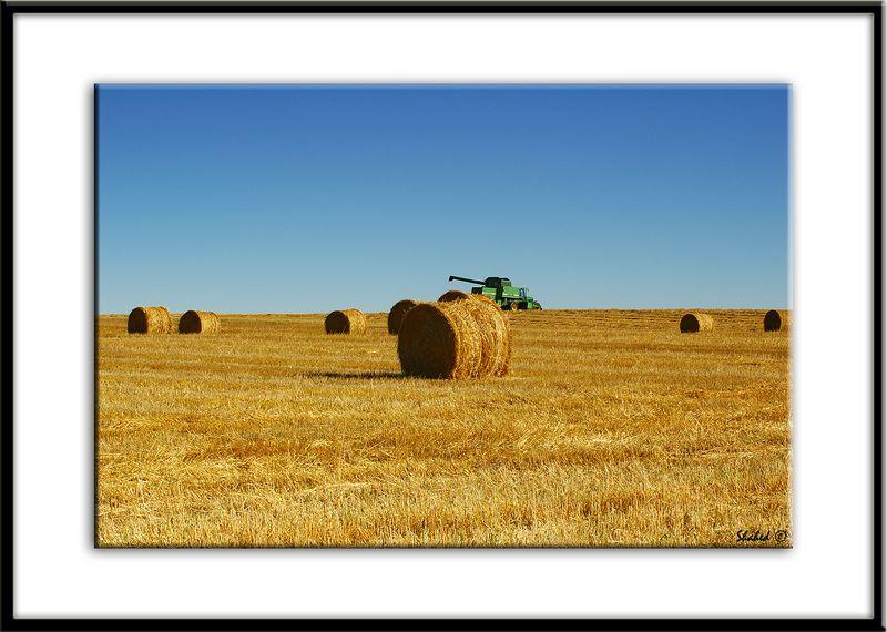 "Ref #6376-N <span id=""caption""><div class=""photocredit"">Photo © LenScape Photography</div></span>"
