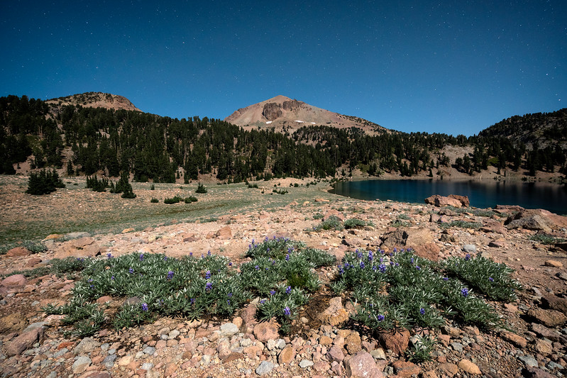 Lake Helen Wildflowers