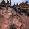 Garden of Eden Wildflowers, Arches National Park, UT