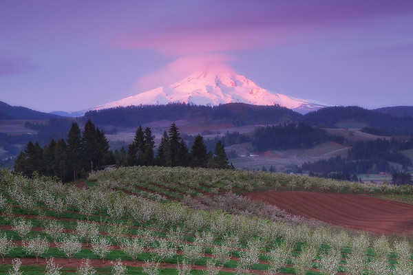 """Hood River Orchards Sunrise"""