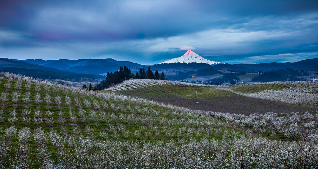 Hood River Orchard Sunrise