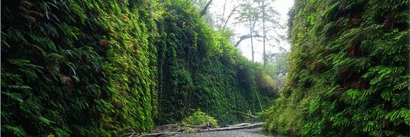 Fern Canyon, Redwoods Park  Shot with Digital