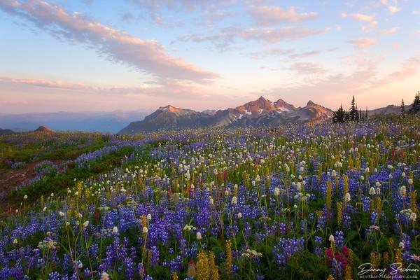 Peak Bloom