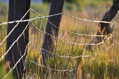Sunrise Fenceline