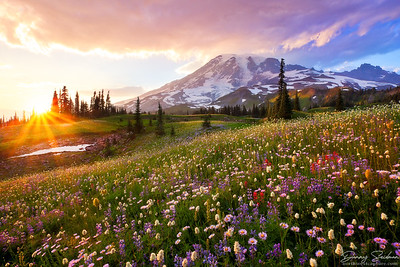 The Smell of Wildflowers