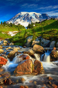 Paradise Mt. Rainier National Park, Washington