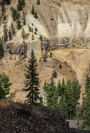 Trees on Rock