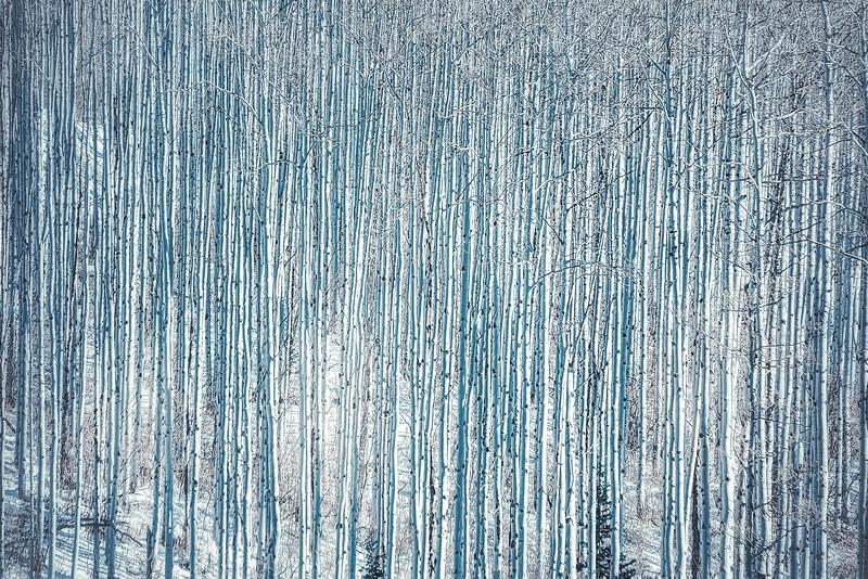 Blue Aspens
