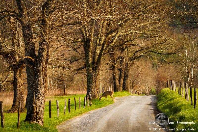 Cade's Morning Road
