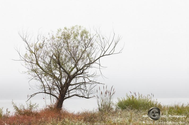 Enhanced by Fog