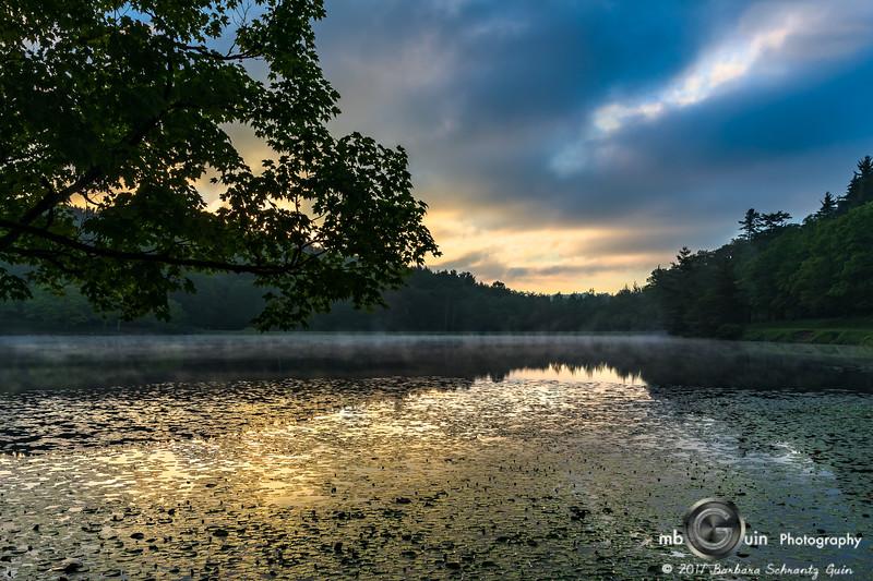 Sunrise on Lily Pads
