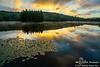Bass Lake Brilliance