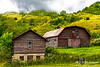 Barns on a Hill