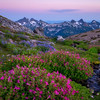 A Stream Runs thru an Alpine Meadow