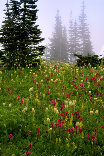 Misty Paradise Meadows