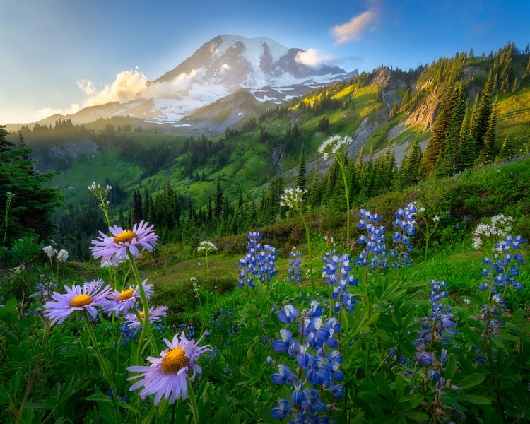 The Best Life is the Meadow Life