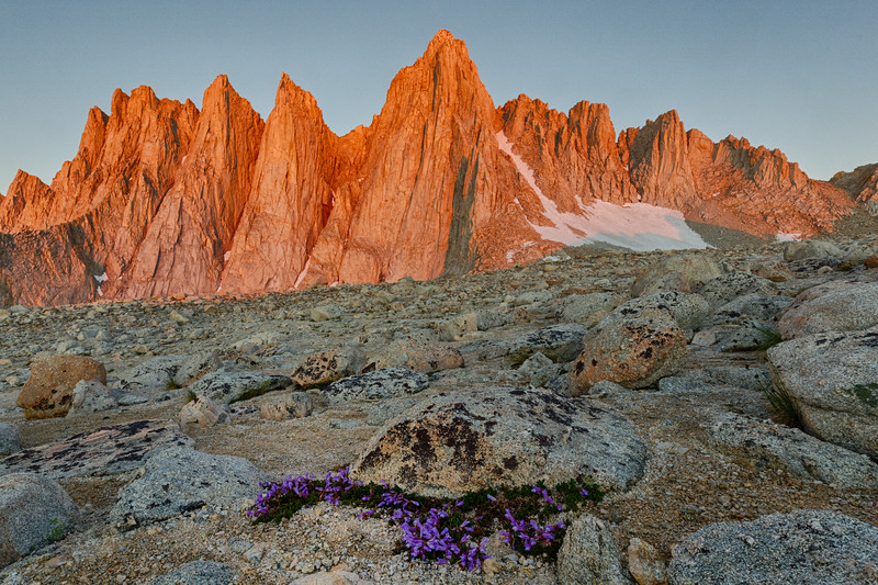 Rock Garden in Bloom at 12,700 feet on Mt. Whitney