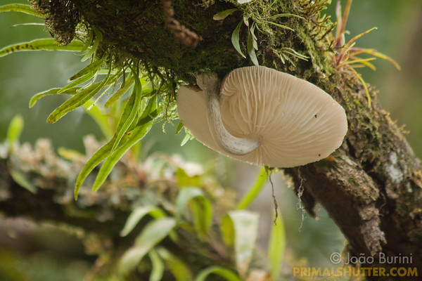 White mushroom growing under a tree