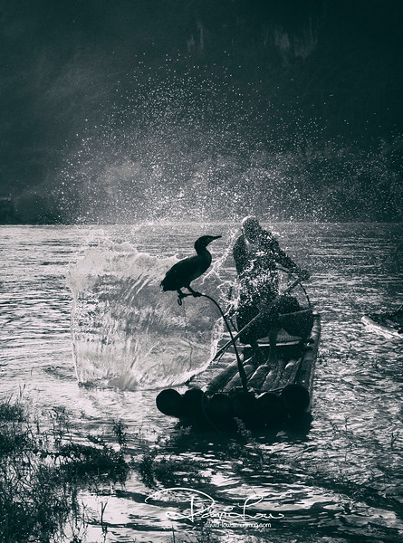 A fisherman thumping the water to attract fishes for cormorant an easier catch