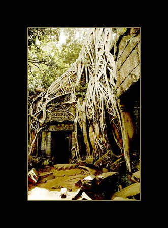 Temple of Ta Prohm, Cambodia