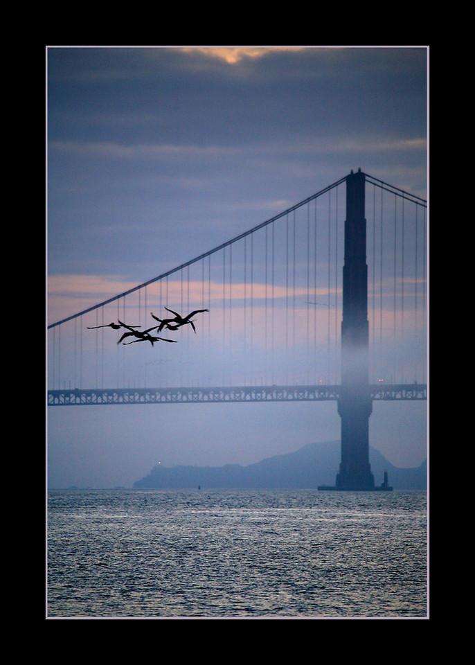 Birds in Flight near the Golden Gate Bridge, San Francisco