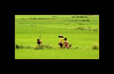 Children Fishing in a Creek near Rice Paddies, Vietnam