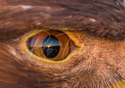 Sunset through the eye of an eagle