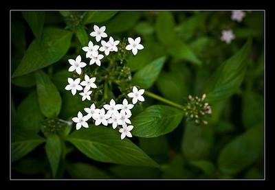 Smoky Mountains wildflowers