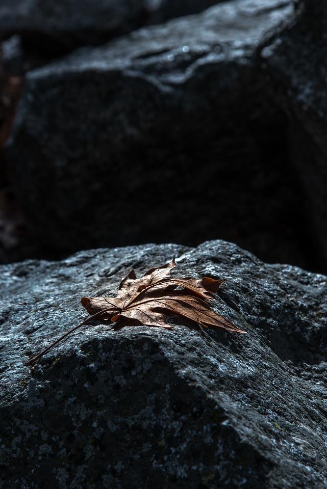 Leaf on a Rock