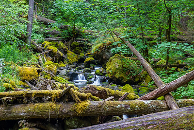 Stream on Silver Falls hike ~ Mt Rainier