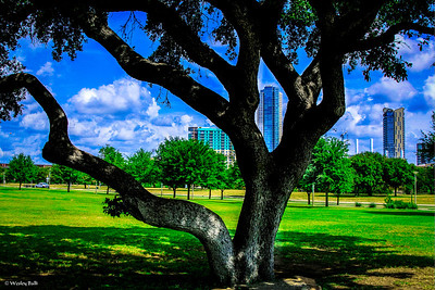 8/21/3013 A favorite Tree at Auditorium Shore