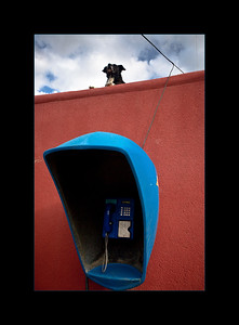 Dog with a commanding view over a public telephone, Valley of the Moon