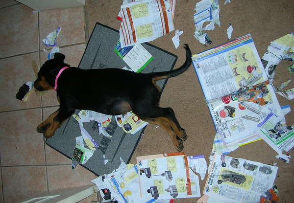 A Well Read Puppy