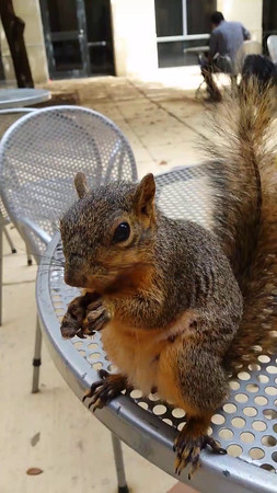 UT Squirrel Vid #2