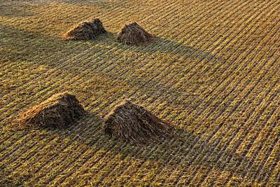 Freshly Cut Hay, Bagan (Pagan)