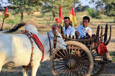 Wedding Ox Carts, Bagan (Pagan)
