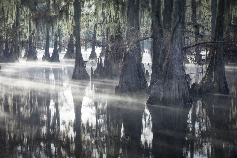 Magic in the swamp