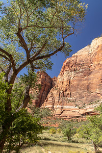 Near Angels Landing