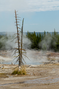 Along the West Thumb Geyser Basin Trail