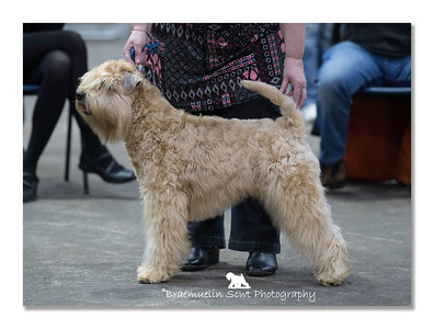 Graduate Dog - 1st